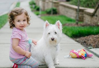 Best dogs for babies