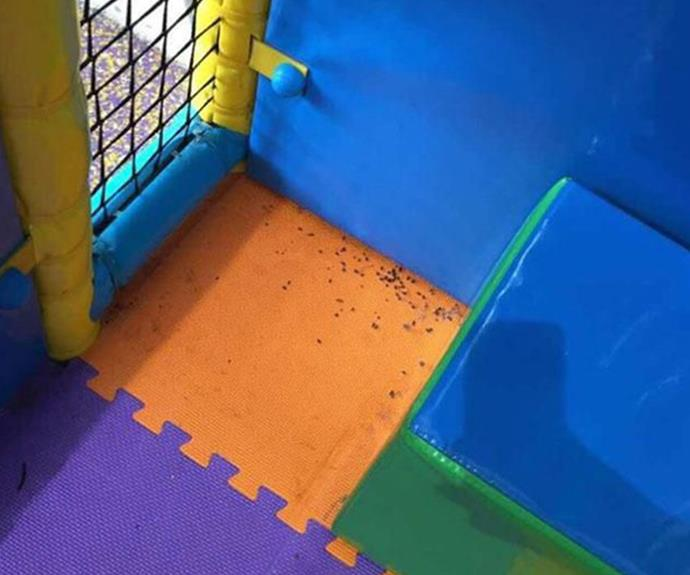Melbourne mum finds rat droppings