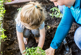 How an organic vegetable garden can improve the value of your home and help you save on grocery bills
