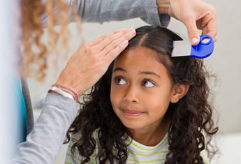 How to treat the new breed of 'super' head lice that are resistant to store-bought products