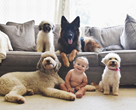 smiling Baby amongst a group of dogs