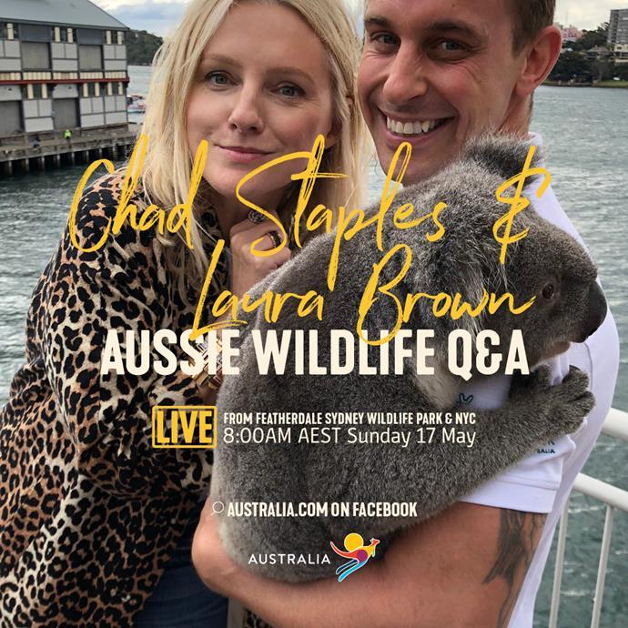 Tourism Australia Live Streams