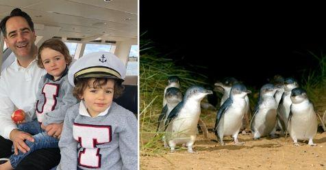 Wippa narrates Penguin Parade Bedtime Stories