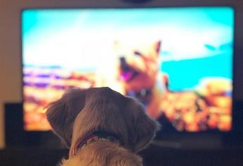 DOGTV is coming down under to revolutionalise pet care